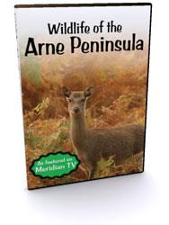 Wildlife of the Arne Peninsula