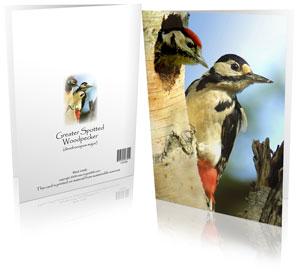 woodpecker-greeting-card